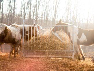 strøelse til heste